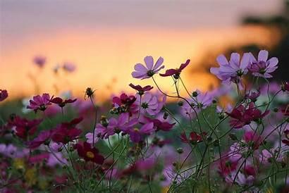 Screen Wallpapers Flower Flowers Widescreen Sunset Nature