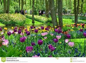 Tulpen Im Garten : tulpen im fr hjahr unter dem hellen sonnenschein im garten ~ A.2002-acura-tl-radio.info Haus und Dekorationen