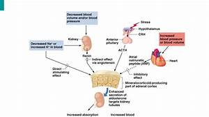Endocrine Glands And Its Hormonal Function