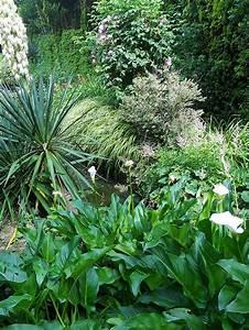 Plantes à Feuillage Persistant : les arums inspirations desjardins ~ Premium-room.com Idées de Décoration