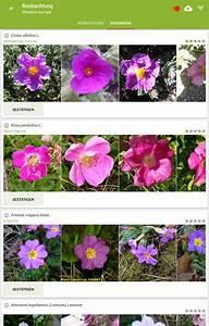 Blumen Erkennen App : pl ntnet pflanzenbestimmung android apps auf google play ~ A.2002-acura-tl-radio.info Haus und Dekorationen