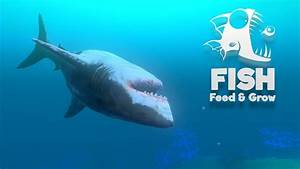 Great White Shark Grow Guide