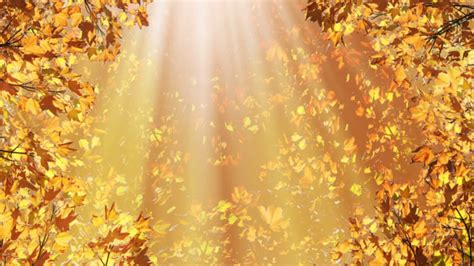 Fall Backgrounds Realistic by Fall Background Images That You Can Use In Your Designs