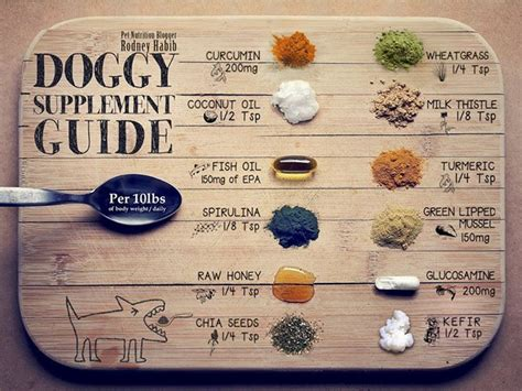 pet nutrition doggy supplement guide pet projects