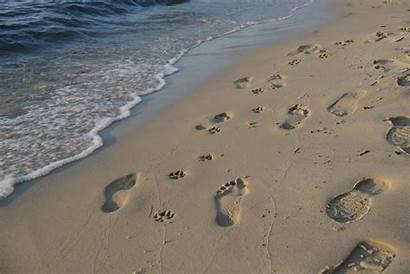 Pet Sand Footprints Walking Loss Person Feet