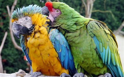 Quick Facts About Bird Feathers - Birding World