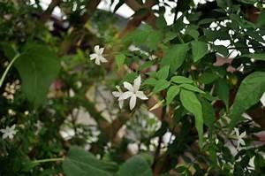 Support Plantes Grimpantes : quel support pour ses plantes grimpantes marie claire ~ Dode.kayakingforconservation.com Idées de Décoration