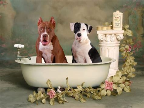 How Often To Shower Puppy by Bath Dogica 174 3d Bathing Tips How Often To Bath