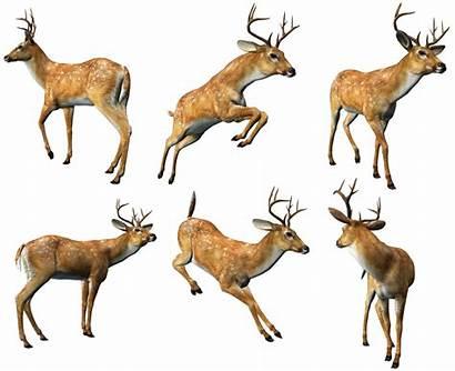Clipart Deers Animals Animaux Clip Deer Animal