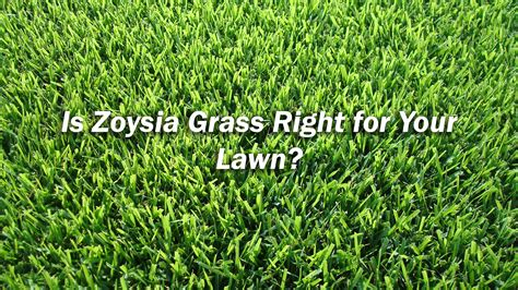 Is Zoysia Grass Right For My Lawn?