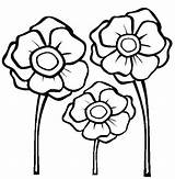 Coloring Poppies Remembrance Template Pages sketch template