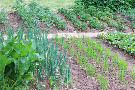 Gemüsebeet Richtig Anlegen gem 252 sebeet neu anlegen richtig planen f 252 r beste ertr 228 ge