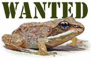 Frog Watch Team Is Looking For A Few Good Amphibians
