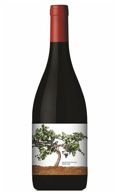 Recanati Winery Sirah Reserve Petite Israel Wine