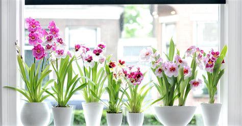 orchideen schneiden orchideen richtig schneiden mein sch 246 ner garten