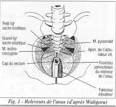 mal au coccyx assis sofmmoo la socit franaise de mdecine manuelle the society of manual medicine