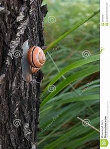 escargot de brown en dehors de sa maison rampant sur un With maison en tronc d arbre 12 larbre de jesse