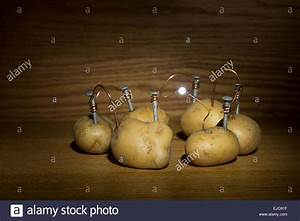 Alternative Energy Source Electrical Current Of Potato