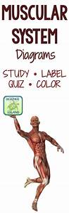 Best 25  Anatomy And Physiology Quiz Ideas Only On