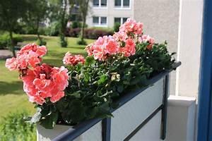 Künstliche Blumen Für Balkonkästen : blumenkasten mit rosa blumen foto bild pflanzen pilze ~ A.2002-acura-tl-radio.info Haus und Dekorationen