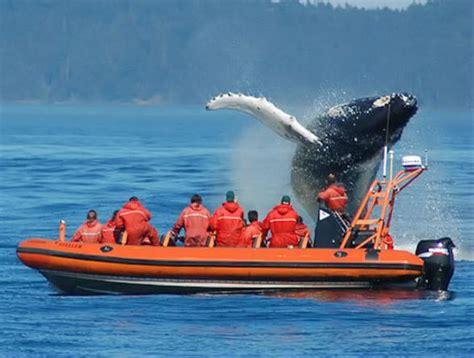 Yellow Zodiac Boat by Whale From Zodiac Boat Bon Voyage