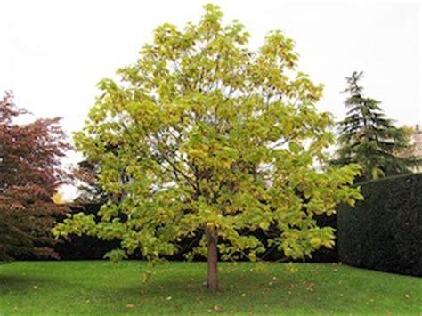arbre croissance entretien hauteur tout