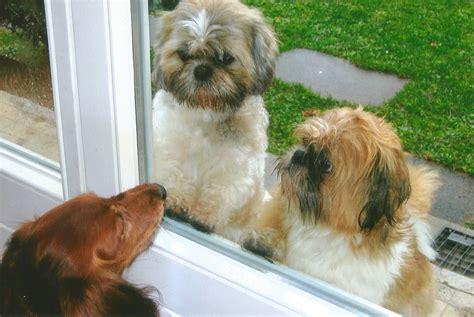 wohnungssuche mit hund worauf achten knifflige wohnungssuche mit hund mf tierblog