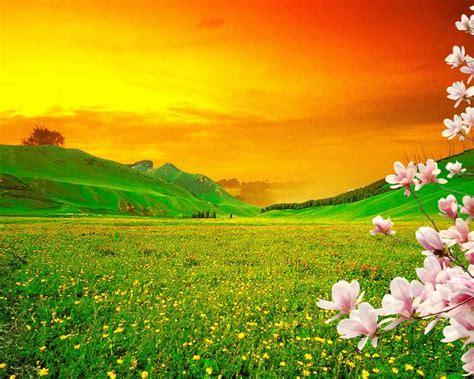 spring blooming trees pink sakura flowers  green meadow