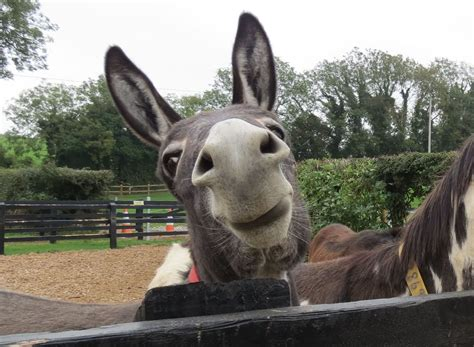 funny donkey face pictures     laugh