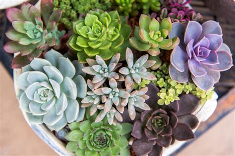 how to care for succulents in pots image gallery succulent care