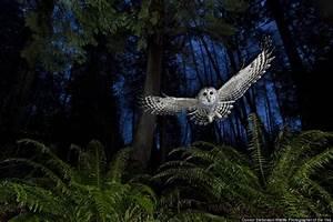 Winners of wildlife photographer of the year 2013 for Wildlife photographer of the year 2013