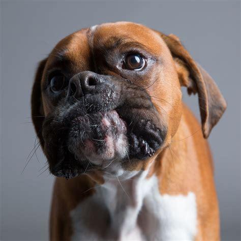im  dog photographer  specializes  derpy