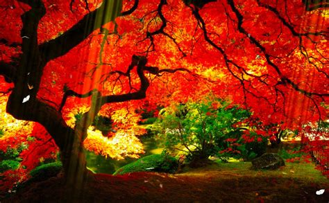 Animated Autumn Wallpaper - windows 7 animated wallpapers space