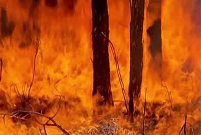 Forest Fire Kebakaran Incendio Hutan Burning Woods