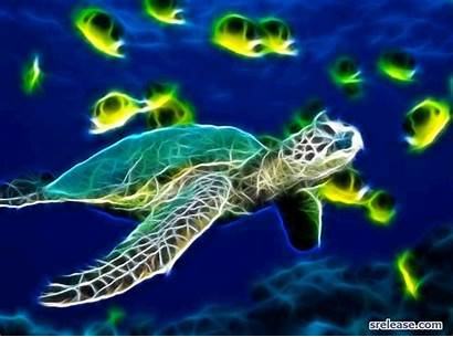 Turtle Sea Animated Turtles Wallpapers Computer Backgrounds