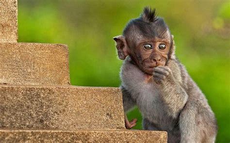 Free Image Bank: Fotografías de changos monos simios y