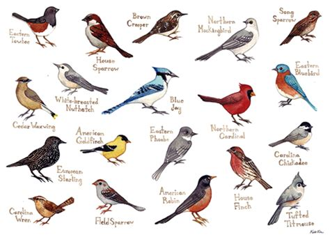 north carolina birds identification