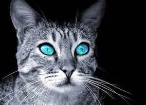 Warrior Cat Name Quiz Personality