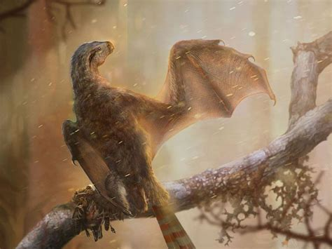 Newly Discovered Bat Like Dinosaur Reveals the Intricacies