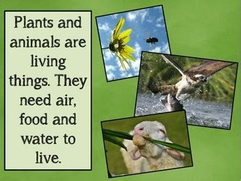living and non living things powerpoint by melton tpt
