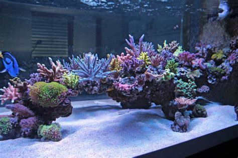Saltwater Aquarium Aquascape by Show Your Large Tank Aquascape Page 17