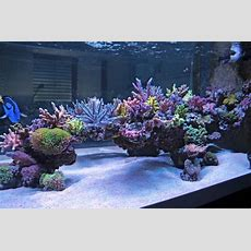 Cool Reef Tank Aquascapes?  Reef2reef Saltwater And Reef