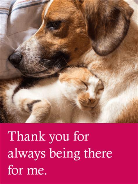 loving dog cat   card birthday greeting cards  davia