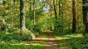 Foret à Bois : bois et for ts quels avantages pour l 39 investisseur ~ Nature-et-papiers.com Idées de Décoration