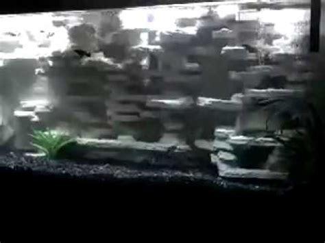 aquarium background diy  gallon freshwater youtube
