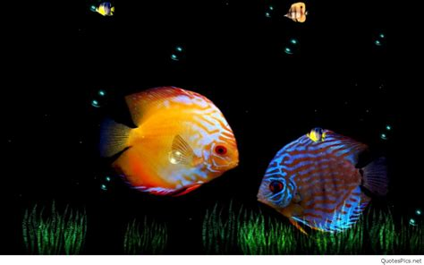 Animated Wallpaper - animated fish wallpaper for mobile top backgrounds