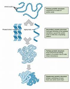 Protein Extraction Methods