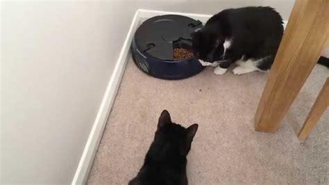 Cat Feeder Andrew James 2019