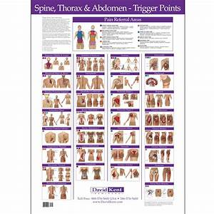 Trigger Point Referred Chart Trigger Point Charts Wall Set Kent Health Systems