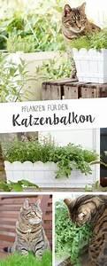 bildergebnis fur katzengras balkon wohnen mit tieren With katzennetz balkon mit mr gardener motorsense zubehör